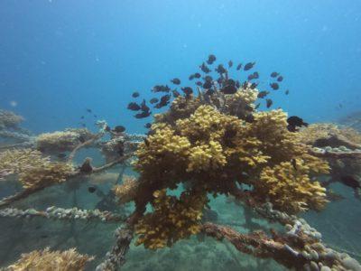 サンゴに群がる魚たち